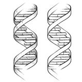 DNA Double helix drawing. Doodle style genetic DNA triple helix illustration in vector format suitable for web, print, or advertising use Royalty Free Stock Photography