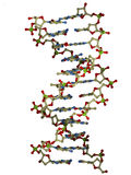 DNA double helix molecule. Ball and stick rendering of a DNA double helix molecule Stock Images
