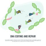 DNA editing nano bots. DNA editing technology. CRISPR/CAS9 manipulation with DNA broken genes. Line vector illustration. Nano bots repairing DNA concept stock illustration
