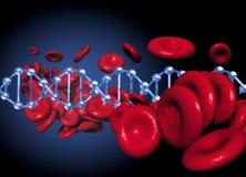DNA en rode bllodcellen Royalty-vrije Stock Afbeeldingen