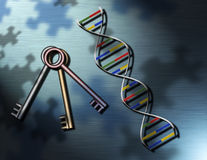 DNA Exploration. A beautiful representation of genetics or genetics research: Keys and a strand of DNA sit upon a lightly textured surface shadowed by puzzle Stock Illustration