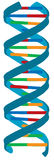 DNA-Farbenabbildung, getrennt stock abbildung