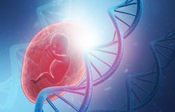 Dna with fetus. 3d illustration Stock Photos