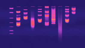 DNA gel Electrophoresis Royalty Free Stock Photos