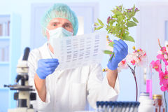 DNA GMO di Analizing Immagini Stock Libere da Diritti
