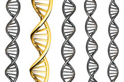 DNA gold outstanding from silver DNA, isolated on white background, 3d rendered Stock Photography