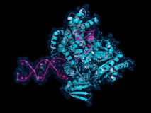 DNA helicase Royalty Free Stock Photos