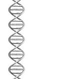 The dna helix. 3d generated picture of a dna helix Royalty Free Stock Image