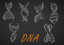 DNA helix models chalk sketches Royalty Free Stock Image