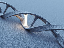 DNA helix molecules. Science concept 3D Stock Photos