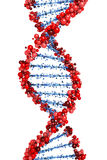 DNA helix. In red and blue Royalty Free Stock Image