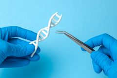 DNA helix research. genetic experiments on human code DNA. Scientist holding DNA helix and tweezers. royalty free stock photo