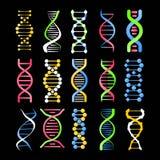 DNA helix symbol ślimakowatej ludzkiej gen komórki koloru wektorowe ikony ustawiać Zdjęcie Royalty Free