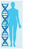 Dna and human body Stock Images