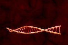 DNA humana Fotos de archivo libres de regalías