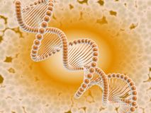 Free DNA I Stock Photos - 16616603