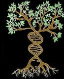 DNA I drzewo ilustracji