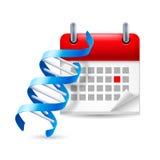 DNA i kalendarz royalty ilustracja