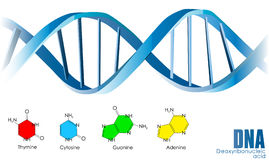 DNA. Illustration background on white Royalty Free Stock Photos