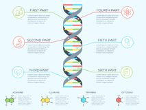 DNA infographic. Genetic spiral, genomic model molecule diagram and adn pattern structure chart vector concept stock illustration