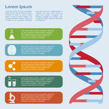 DNA infographic Royalty Free Stock Images