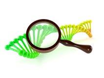 DNA med förstoringsglaset Fotografering för Bildbyråer
