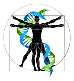 DNA Vitruvian Man. DNA medical concept with Vitruvian man figure like Leonard Da Vinci drawing and double helix strand Royalty Free Stock Image