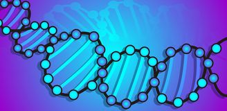 DNA model Stock Images