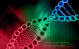 DNA model Royalty Free Stock Photo