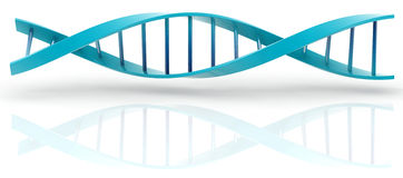 DNA model. 3d DNA model on white background. digitally generated image Stock Photo