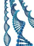 DNA model Royalty Free Stock Photos