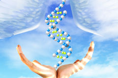 DNA model in hands Stock Image