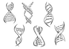 DNA models with double helices sketches Royalty Free Stock Image