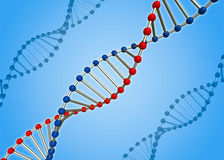 The DNA molecule Stock Images