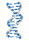 DNA molecule. Rendering of a DNA double helix molecule Royalty Free Stock Photos