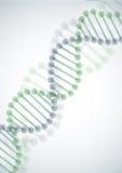 DNA Molecule Background. Stock Images