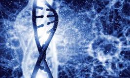 DNA molecule Stock Photos