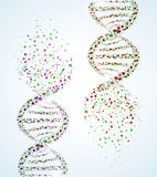 DNA molecule Royalty Free Stock Photos