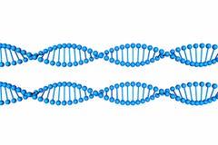DNA-Molecule op witte achtergrond wordt geïsoleerd die Stock Afbeeldingen