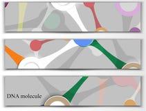 Dna, molecule Stock Photo