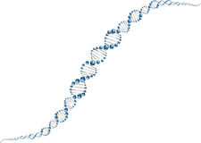 DNA molecule structure Stock Images