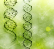 DNA molecules. On the natural background. Eps 10 Stock Image