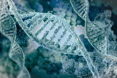 DNA molecules Stock Images