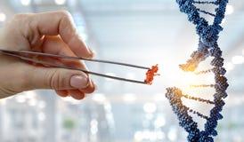 DNA-moleculesontwerp met de vrouwelijke scharen van de handholding Gemengde media stock afbeeldingen