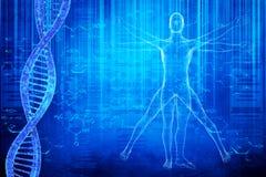 DNA-Moleküle und virtuvian Mann Lizenzfreie Stockfotografie
