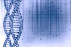 DNA nel bello fondo Immagine Stock