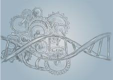 DNA och kugghjul vektor illustrationer