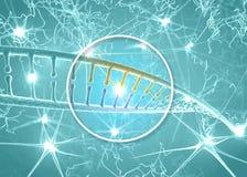 DNA och neurons, DNA som omstrukturerar, omskrivning och fortlöpande regenerering, ökande aktivitet av nervceller stock illustrationer