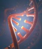 DNA- och RNAmolekylar Arkivbilder