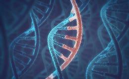 DNA- och RNAmolekylar Arkivfoto